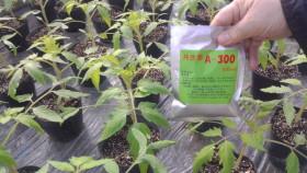 共生菌A-300トマト使用